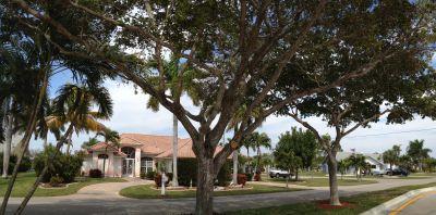 Savona Parkway in Cape Coral Florida