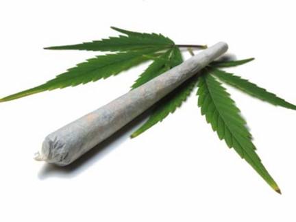 Marijuana, Landlords, & Tenants