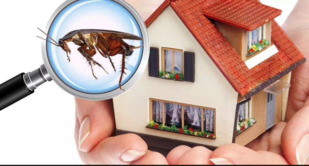 pest control, termite, termite inspection