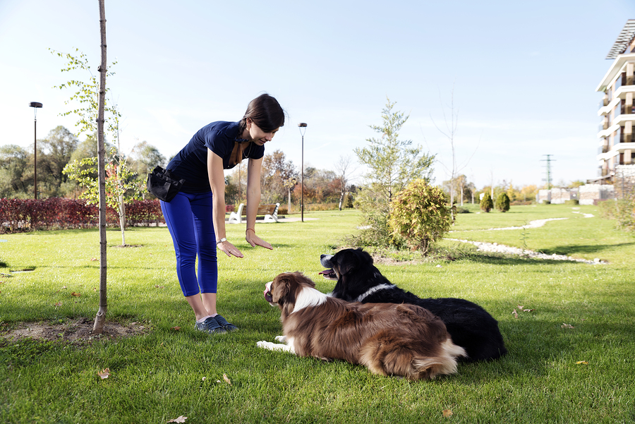 Dogs living in Lake Stevens get obedience training.