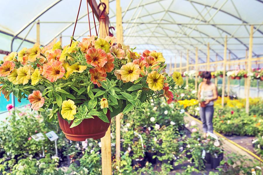 Find plants for Monroe real estate.