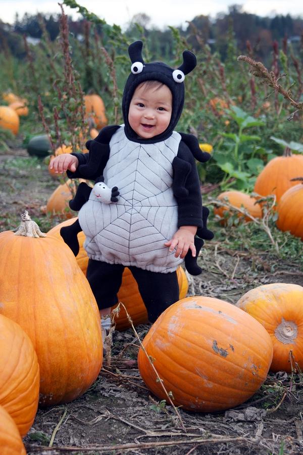 Find pumpkins near Snohomish homes at Bob's Corn and Farm.