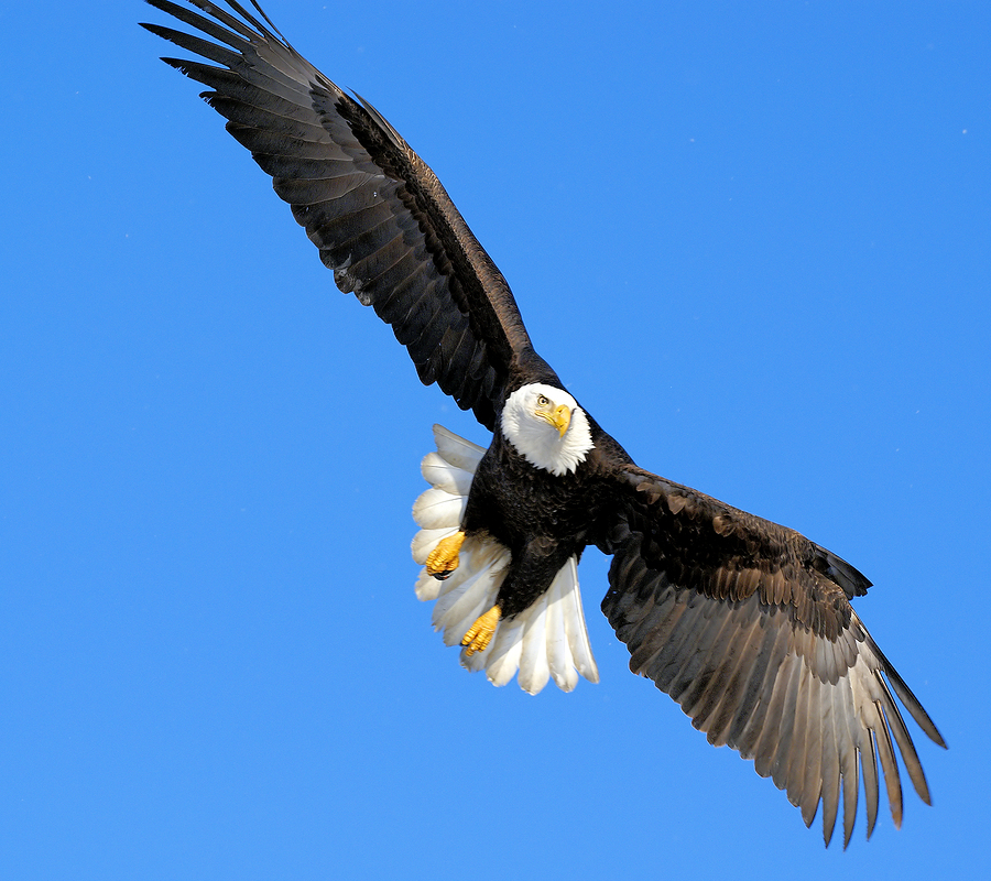Learn about bald eagles on Snohomish real estate.