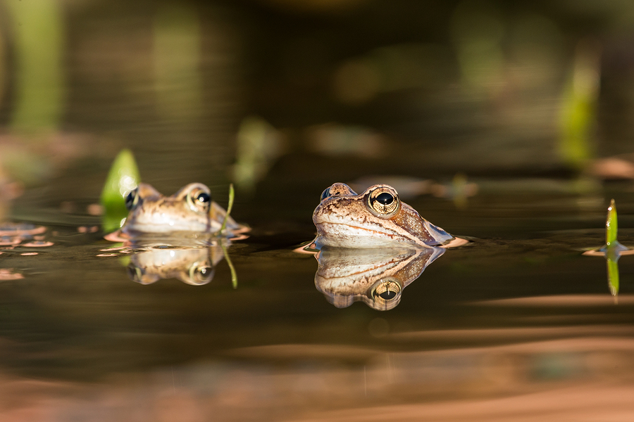 Snohomish home owners celebrate Ground Frog Day.