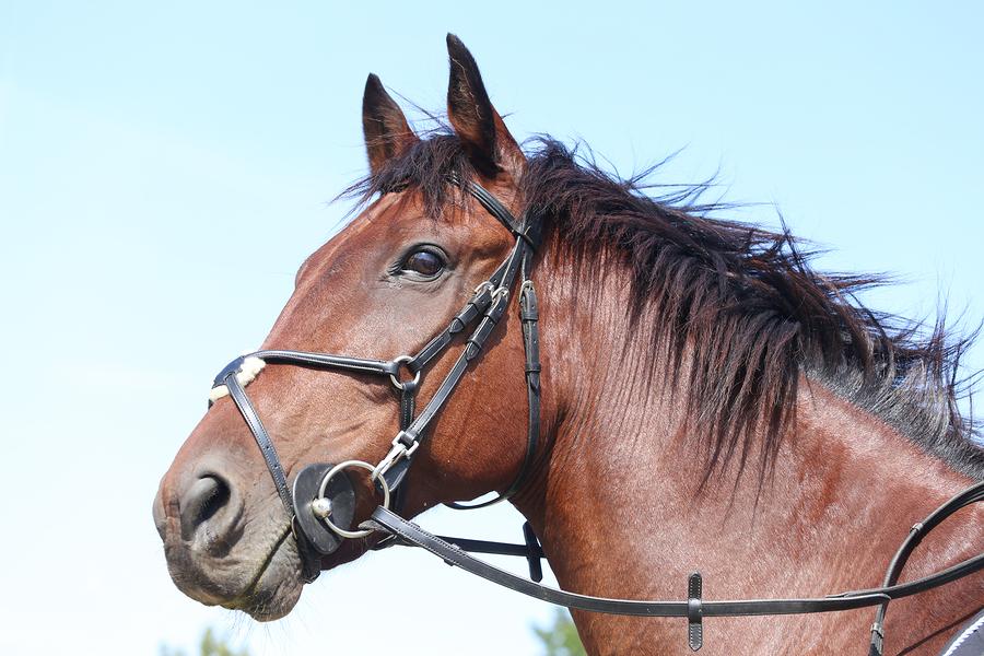 Stable horses on Lake Stevens property at Carleton Farms.