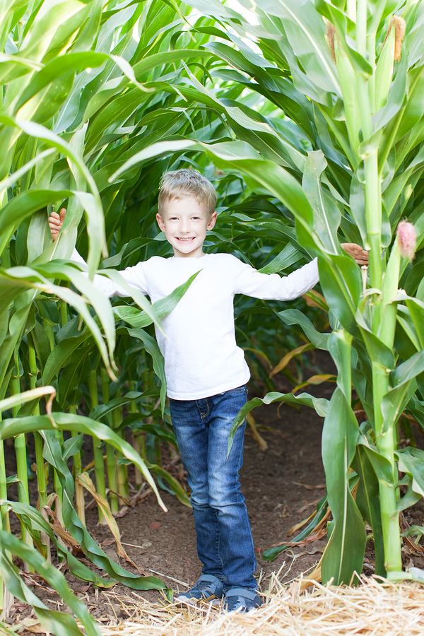 Try the corn maze on Lake Stevens real estate at Carleton Farms.
