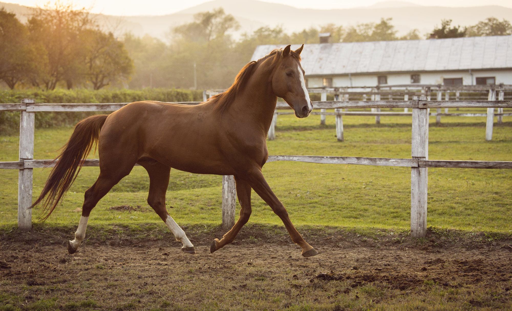 Denver horse property and equestrian estates