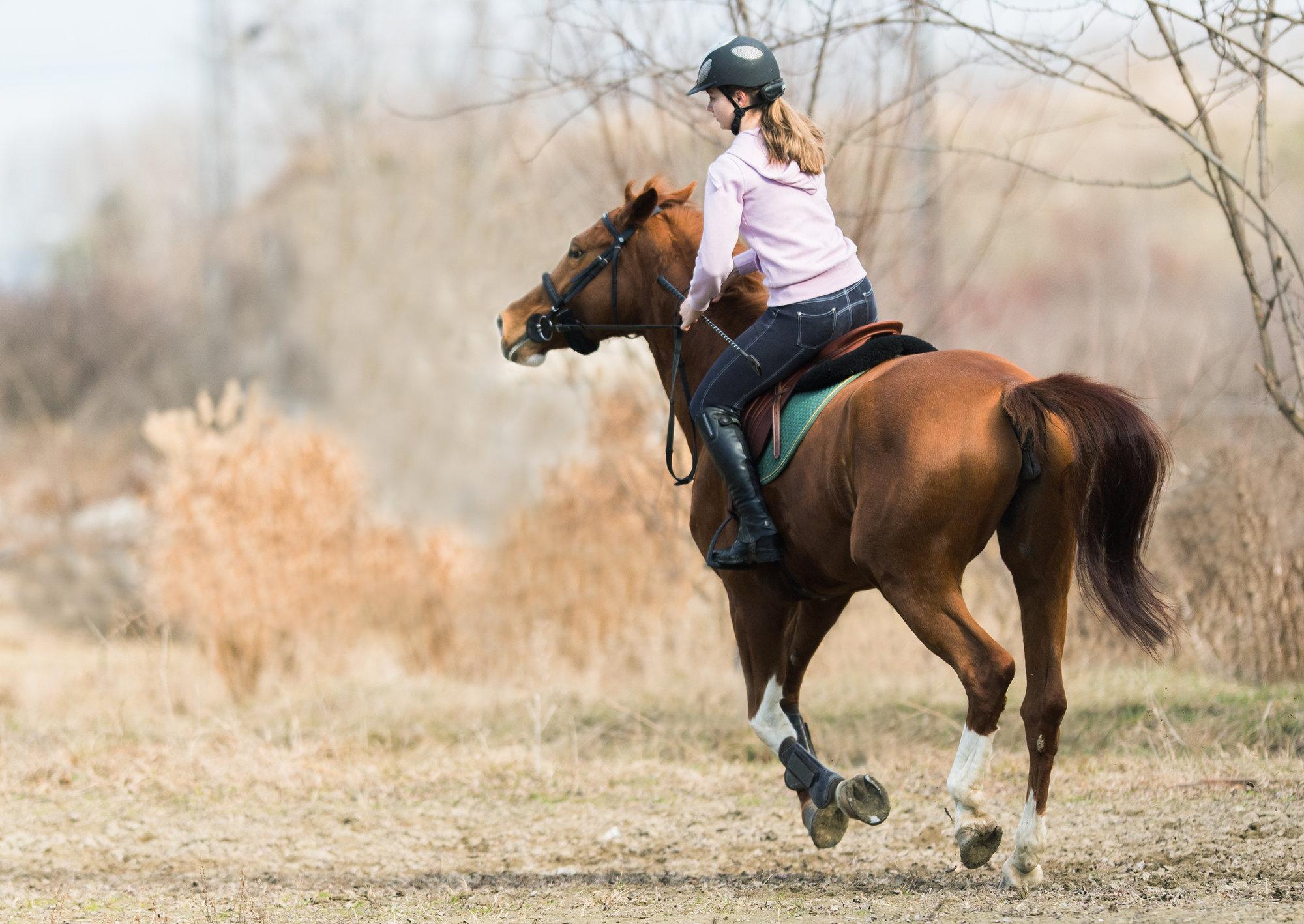 Denver horse property for sale
