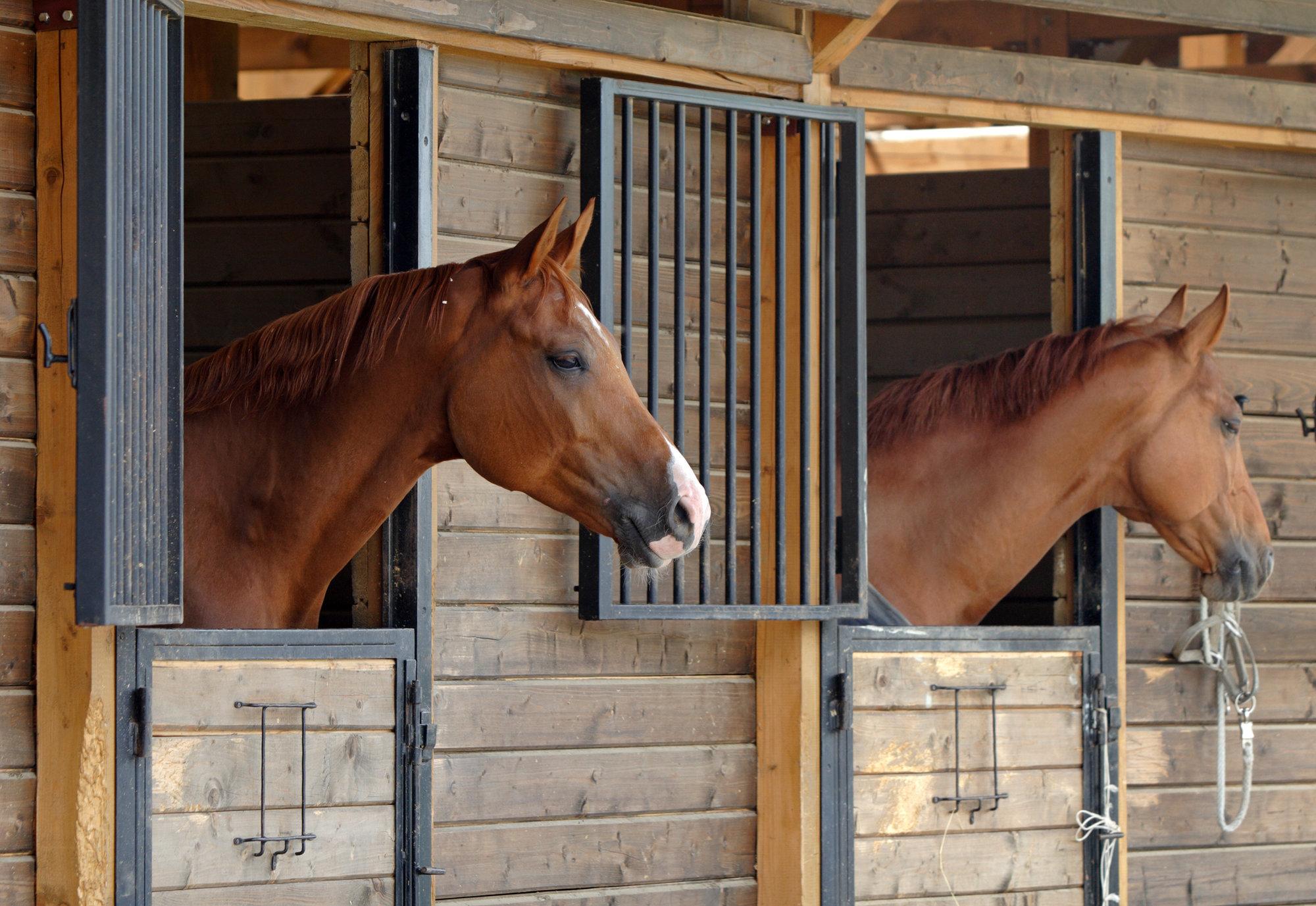Equestrian Horse property Colorado