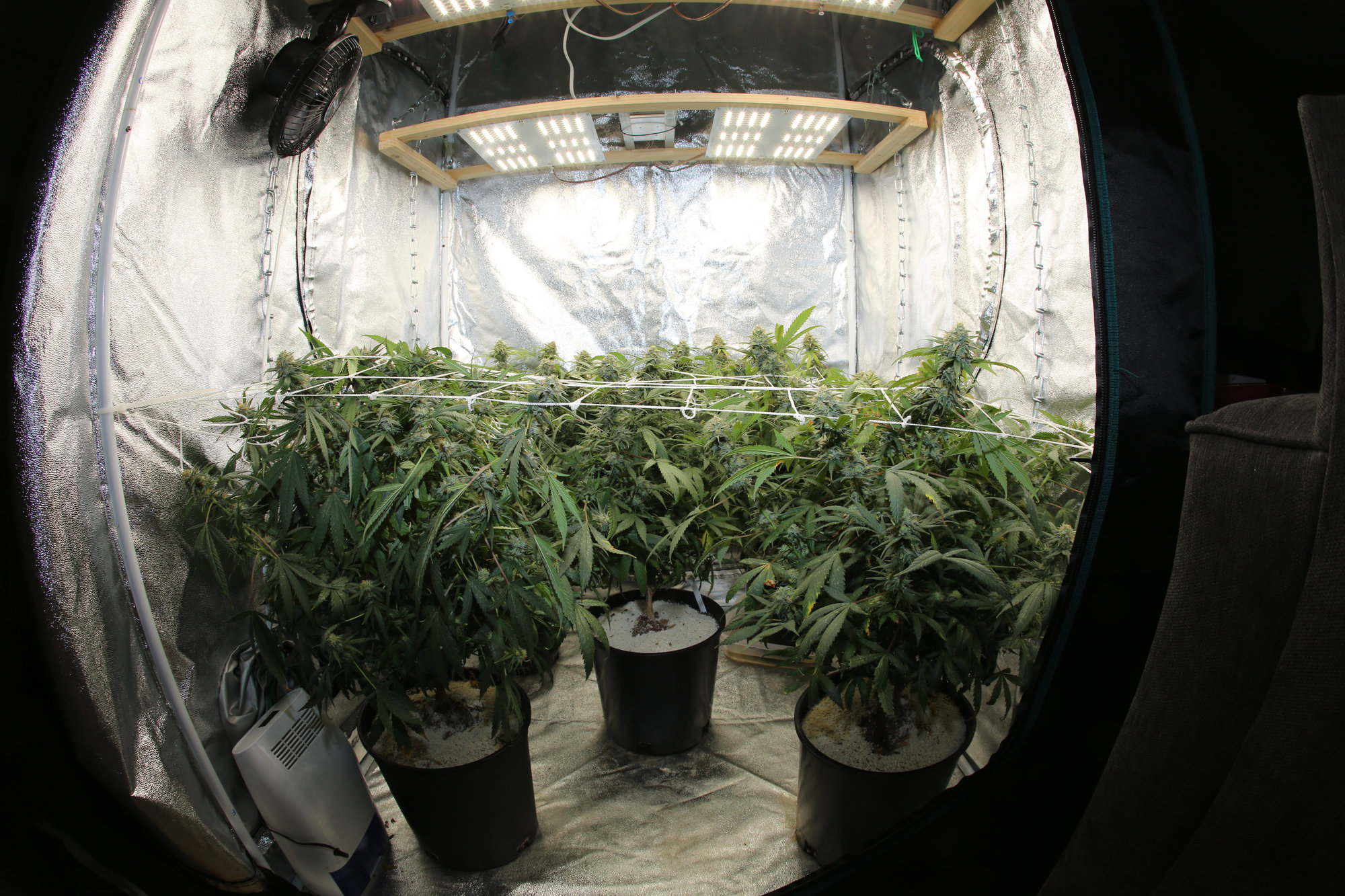 Grow Marijuana at your home
