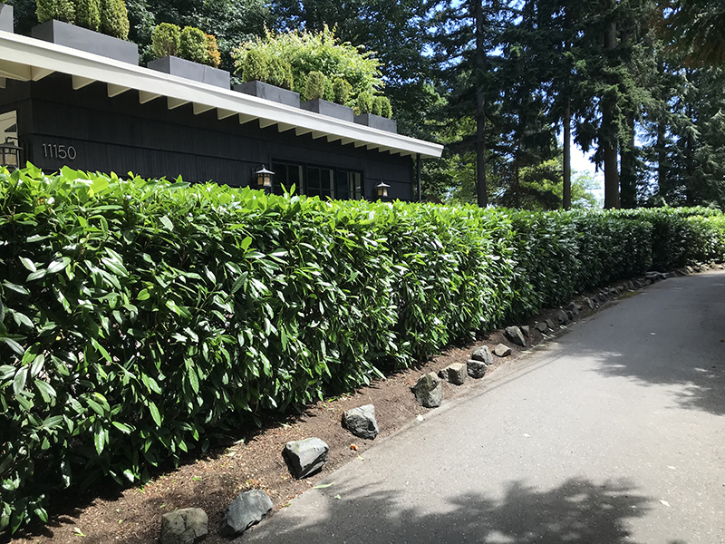 Bainbridge home with hedge for privacy