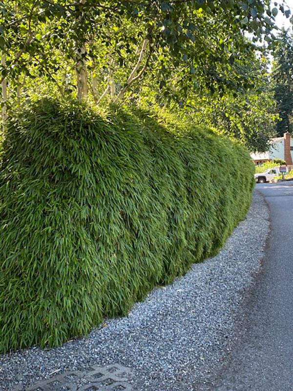 Bainbridge Island Home with hedge