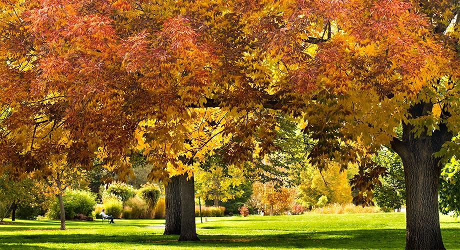 City Parks Real Estate Denver Colorado Homes For Sale