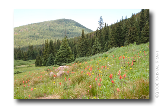 Meadow filled with Colorado wildflowers