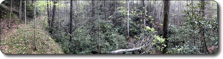 Secluded tract of mountain land off Elk Creek