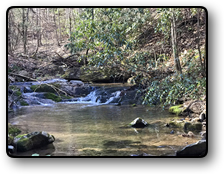 88 acres for sale in Wilkes County NC
