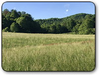 Land for sale near Elk Creek in Wilkes County NC