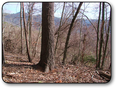 Land For Sale in Valle Crucis NC 44 Acres