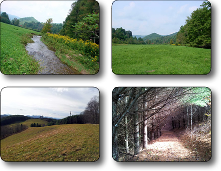 Farm for sale in Ashe County NC