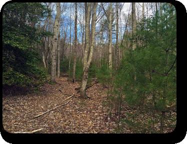 Land for sale on Patton Ridge Road
