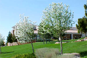 Summerlin City Real Estate