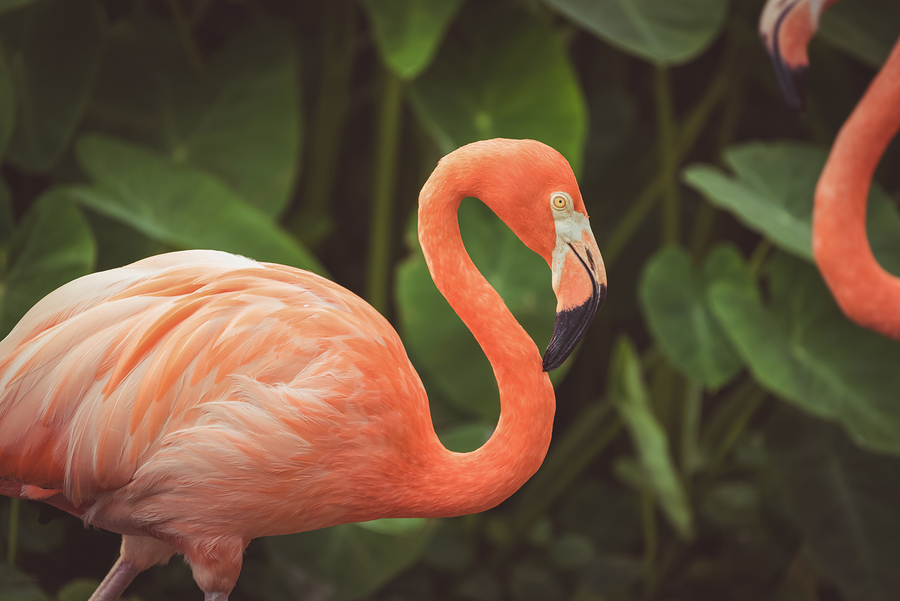 Emerald Isles home owners see flamingos and other native creatures at Flamingo Gardens.