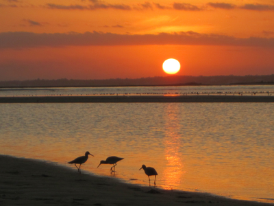Bird's At Sunset - South End Topsail Beach NC