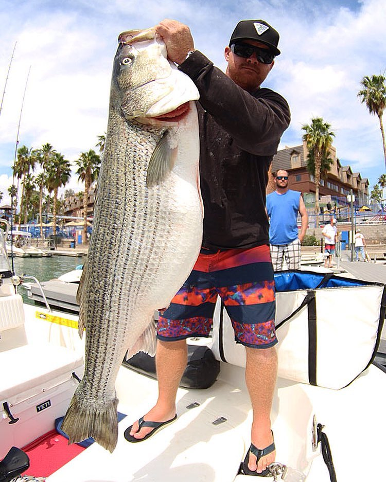 Havasu WON Striper Derby