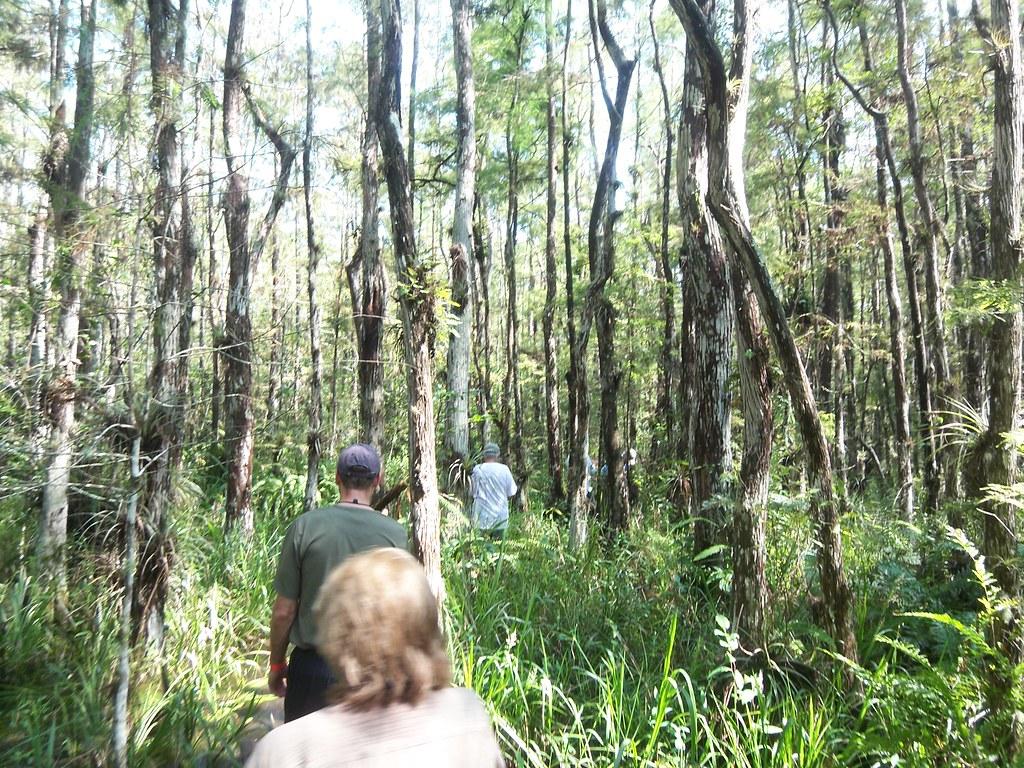 Clyde Butcher Big Cypress Swamp Walk