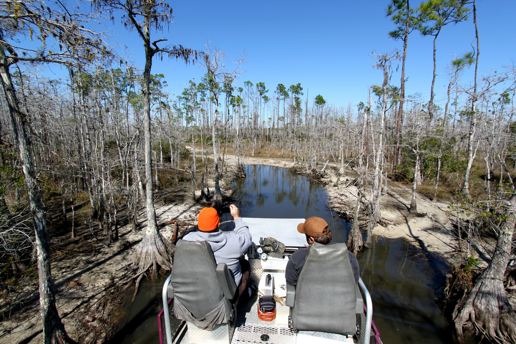 Swamp Buggy SWFL