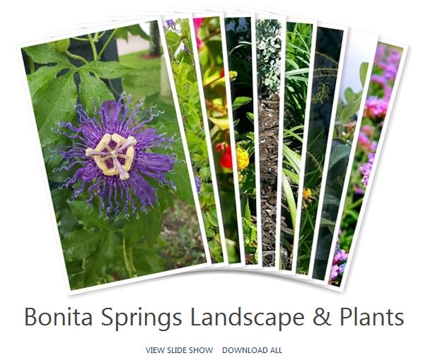 Bonita Springs Landscape & Plants