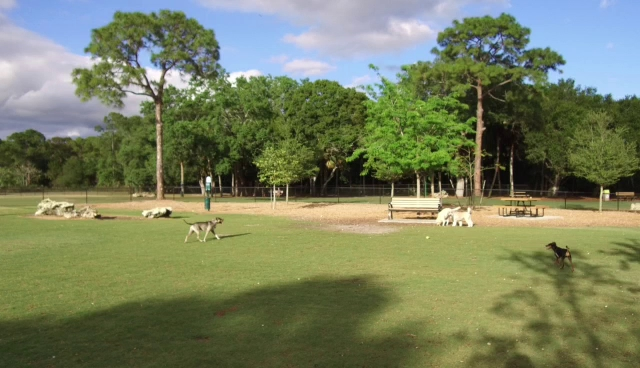 Dog Park Near Eden Rock