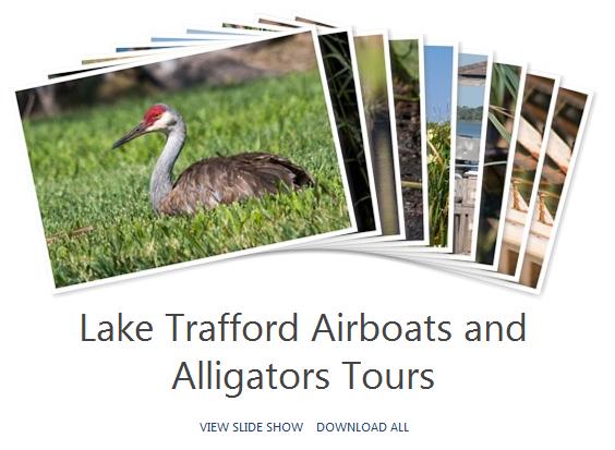 Lake Trafford Airboats & Alligators