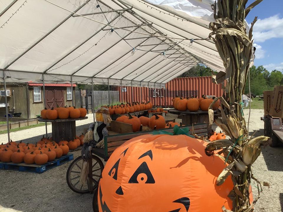 Southern Fresh Farms Fall Festivcal