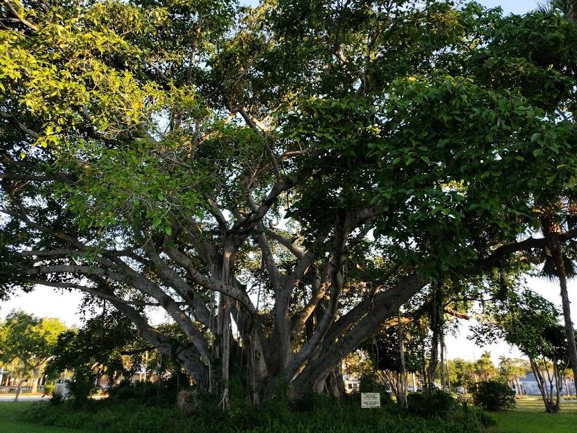 The Banyan Tree Bonita Springs