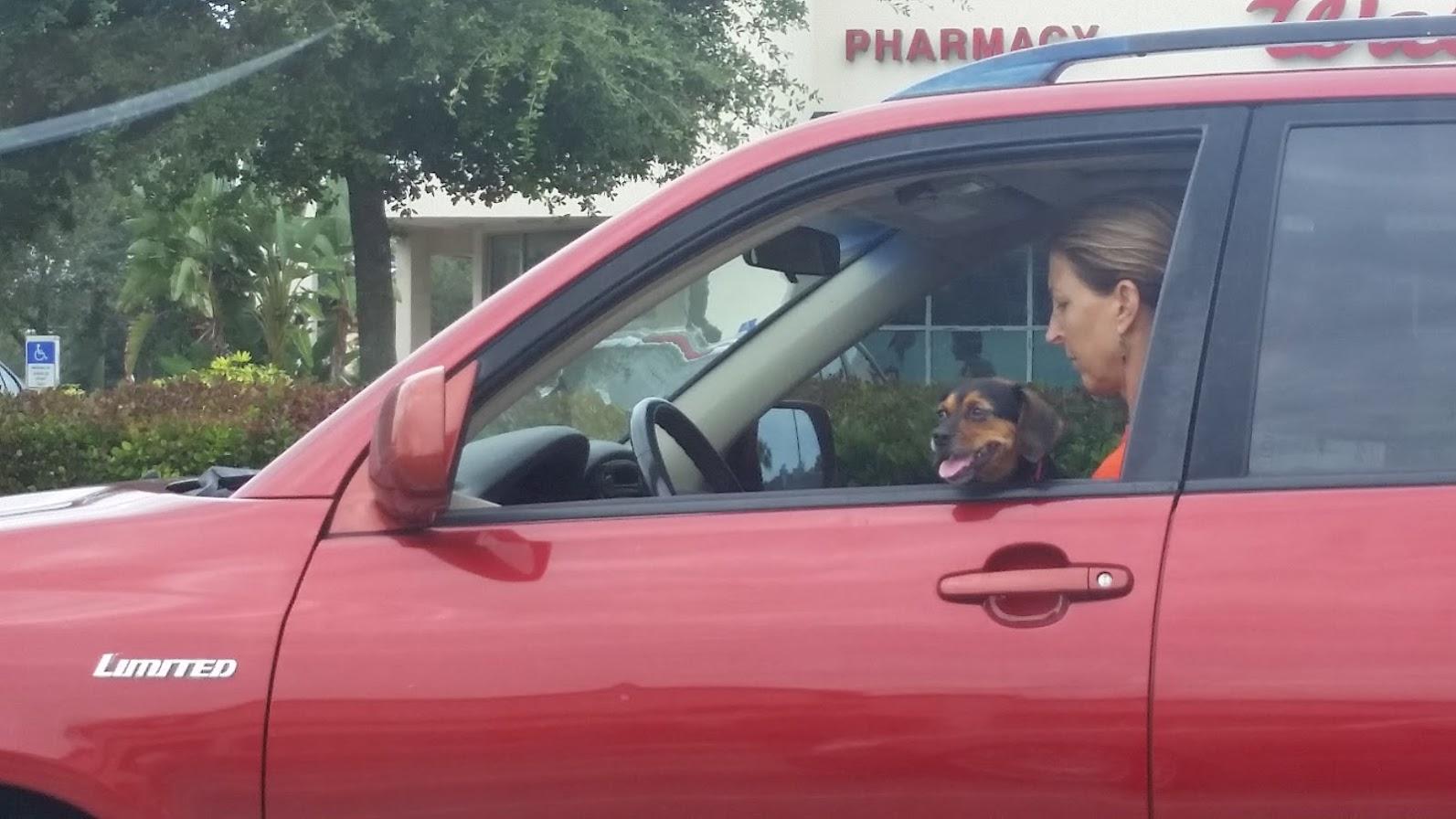 Dogs in car windows