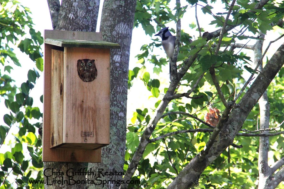 Bonita Springs House for Owls