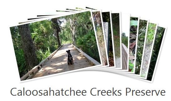 Caloosahatchee_Creeks_Preserve_Photos