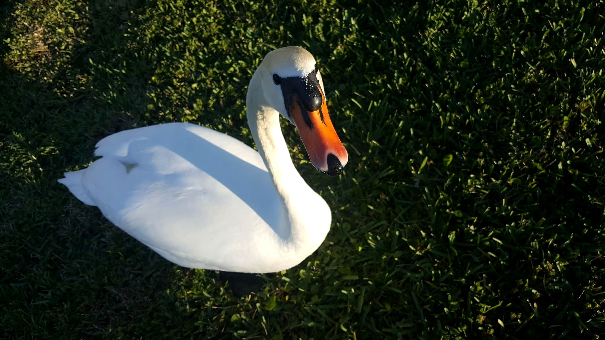 Coconut Point Mall Swan