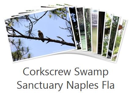 corkscrew swamp sanctuary photo album
