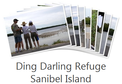 Ding Darling Sanibel Island