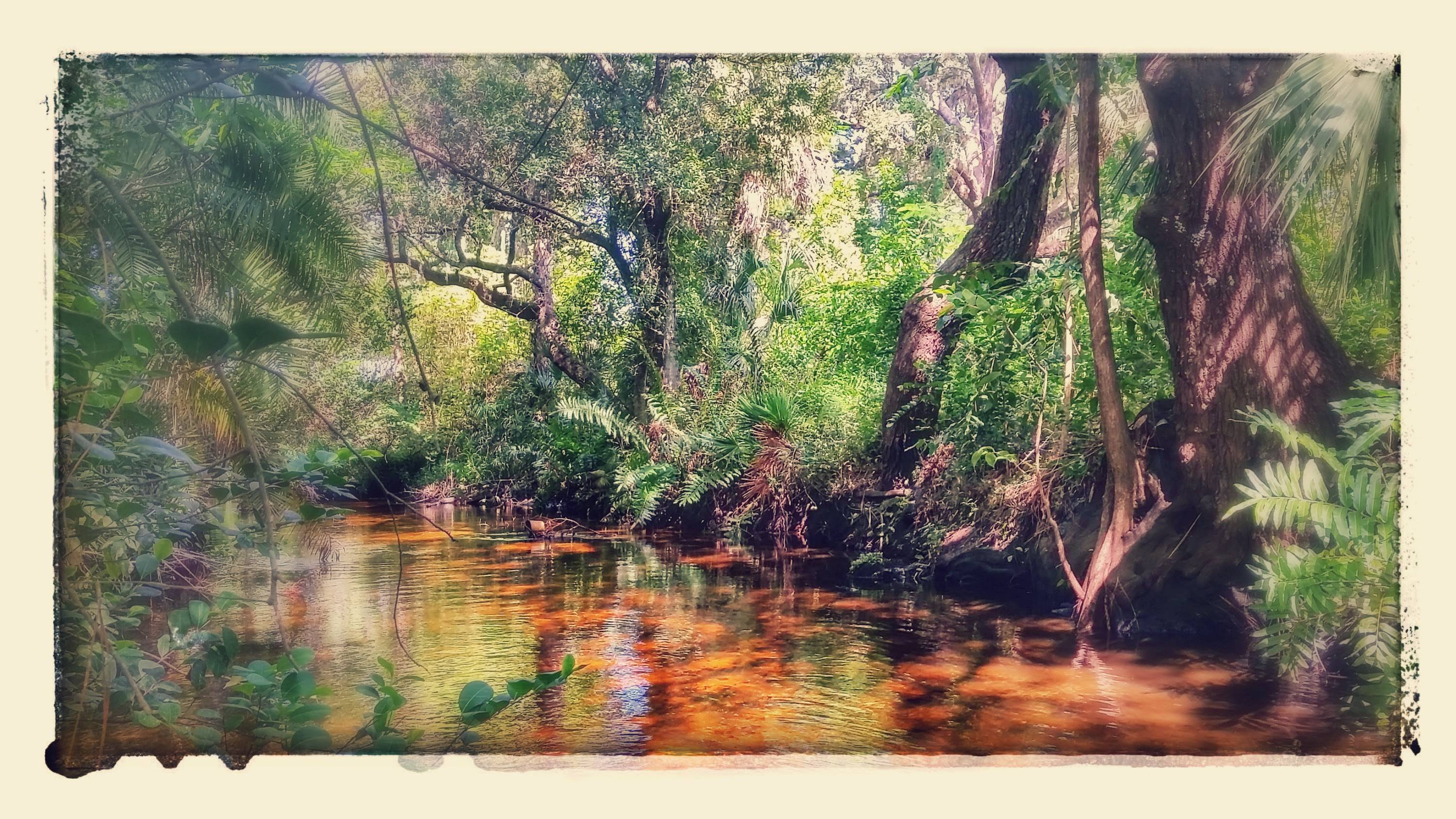 Leitner Creek Bonita Springs Fl