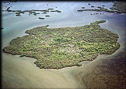 Mound Key Estero