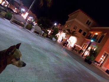 Coconut Point Christmas Dog