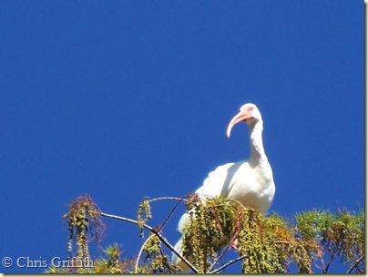 Corkscrew Swamp Sanctuary Naples Florida 037