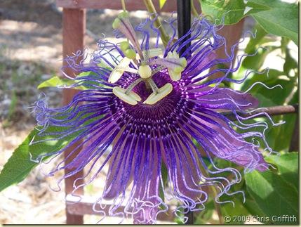 Kings Kew Queens Kew Flower