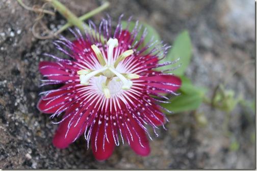 Flower on The Rocks