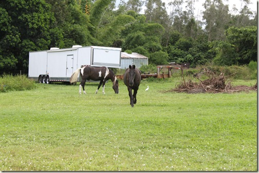 Bonita Springs Horse