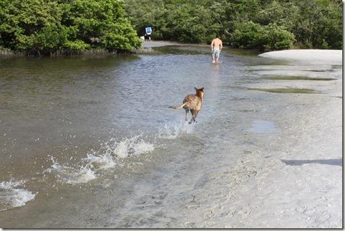 Paradise For Dogs in Bonita Springs, Fl