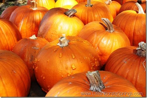 Bonita Springs Pumpkin Patch